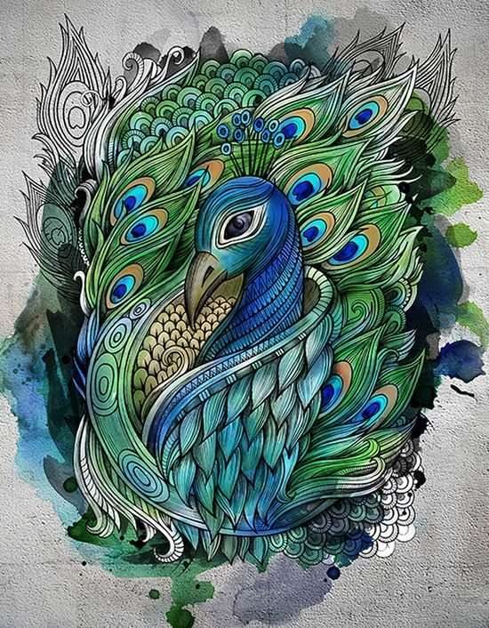 beautiful drawing of a peacock by balabolka