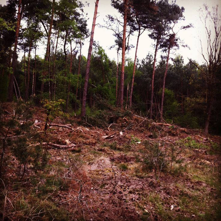 Decaying Forrest