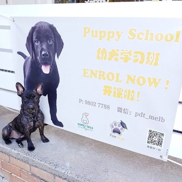 Puppy School Classes Available (English & Chinese) in the New Year  Contact us for more information & bookings.