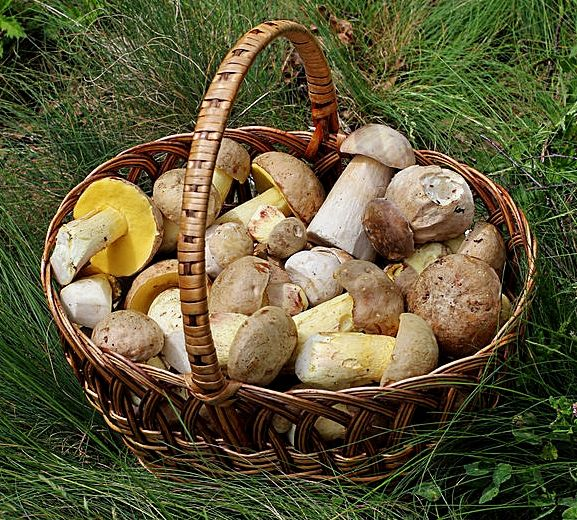 Health Benefits Mushroom, Nutrition Facts, Culinary Uses, Recipes