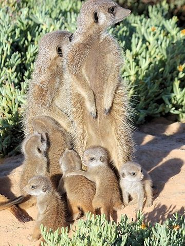 Oudtshoorn Tourism. Oudtshoorn Accommodation. Travel the Klein Karoo & Route 62, South Africa.