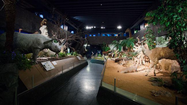 Geneva Natural History Museum - Switzerland Tourism