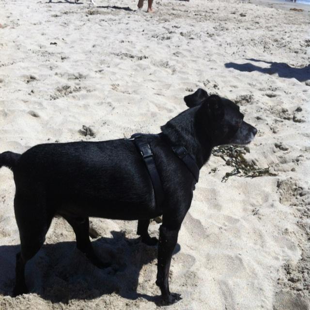 Fatty is a beach bumBeach Bum, Fatty