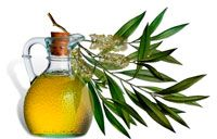 Масло чайного дерева – польза, где применяется