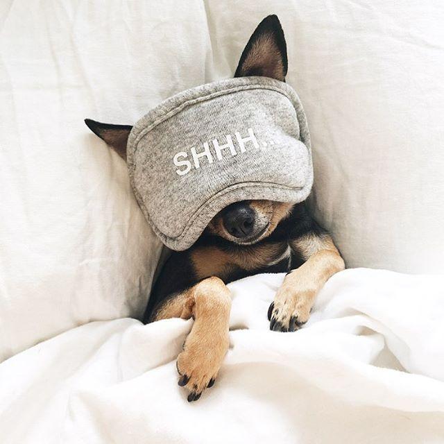 Best Miniature Pinschermin Pin Images On Pinterest - 22 adorable animals wearing miniature sweaters