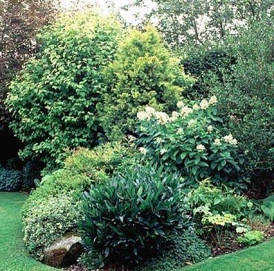 56 best gardening shrub border images on Pinterest Landscaping