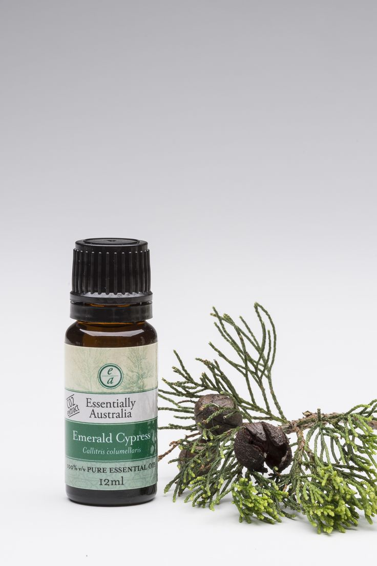 Emerald Cypress (Callitris columellaris)  A deep, woody/pine and hint of lemon aroma, very popular as a grounding, earthy essential oil.