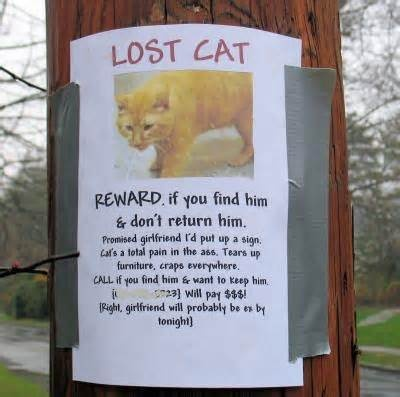Image detail for -Funny Lost cat poster