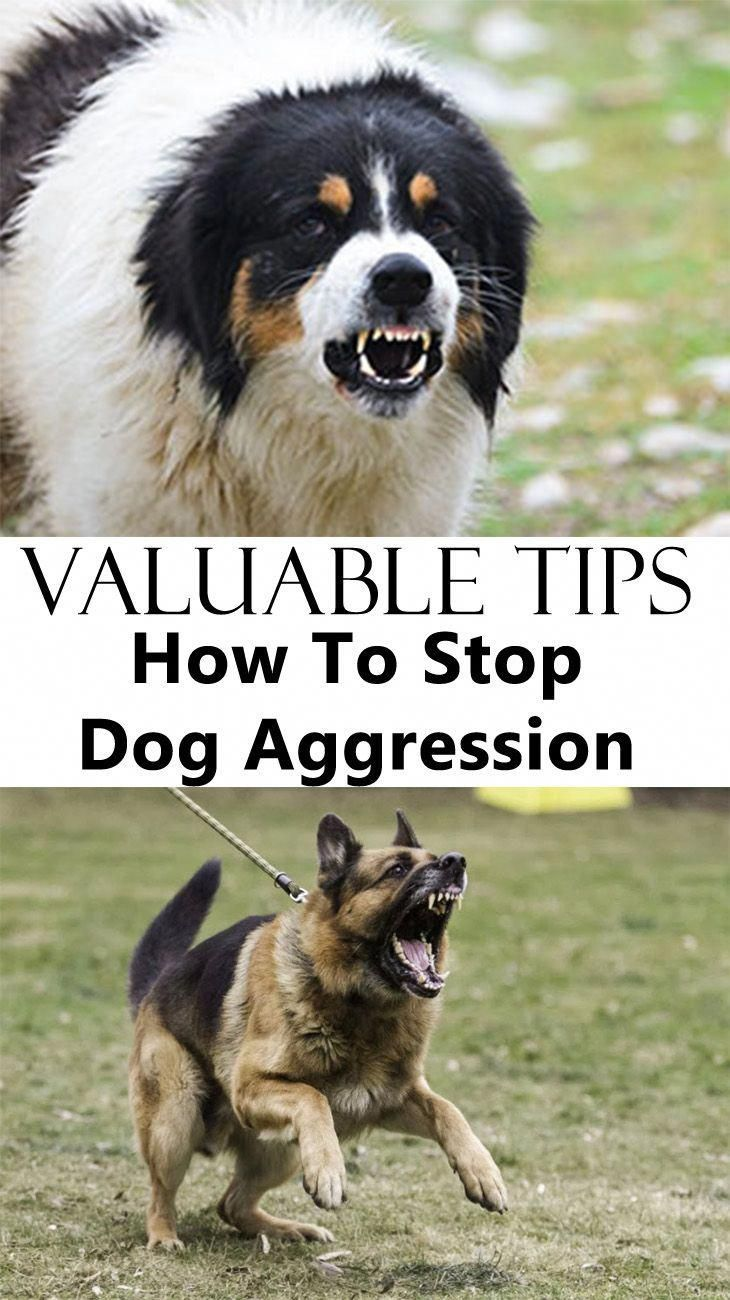 Dog Training Tips How To Stop Dog Aggression Dog Training