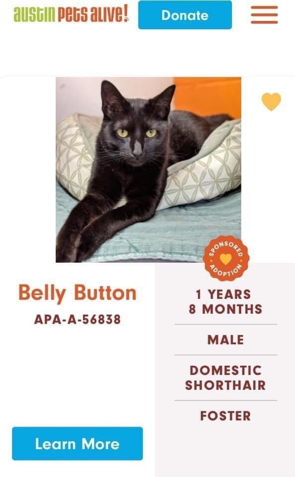 Someone S Giving The Cats At Austin Pets Alive A Ton Of Ridiculous Names Cats Pets Funny Pictures