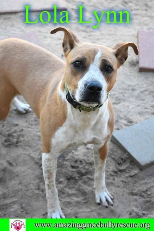Adopt Lola Lynn On Pet Dogs Pets Pet Adoption