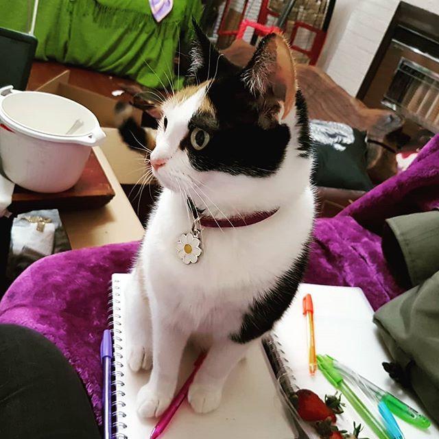 No mum. That's not how u do a Sunday. U is doing it wrong. #catsofinstagram #studybuddy #sundayvibes #nothelping