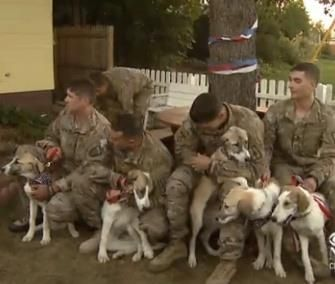 Popular Afghanistan Army Adorable Dog - 7873c4e765c01ee691920331798e07ee--war-dogs-service-dogs  Perfect Image Reference_24387  .jpg