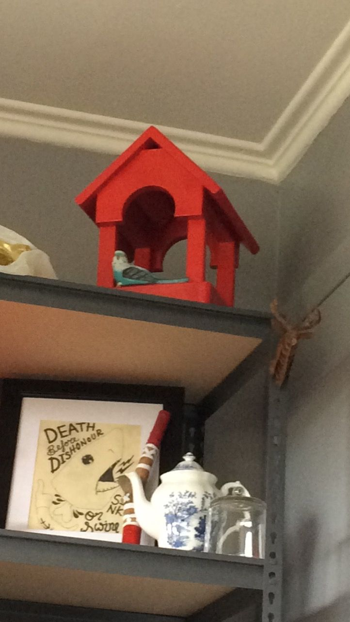 Cherry red bird house with ornamental budgie