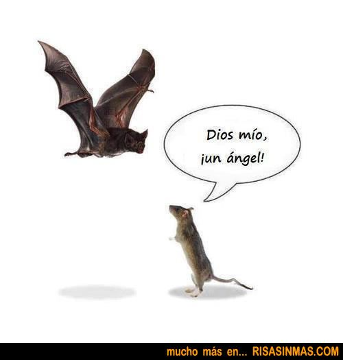 Ratón asombrado | Risa Sin Más