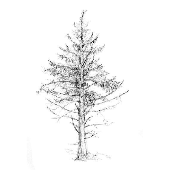Zen tekening boom  Reproductie print  natuur van ZenInks op Etsy