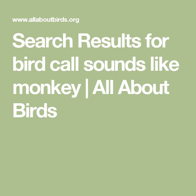 Search Results for bird call sounds like monkey | All About Birds
