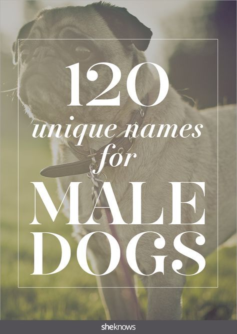 To keep the sports metaphor going, we've also got some adorable names inspired by the sports themselves. #Pets #Dog #Names