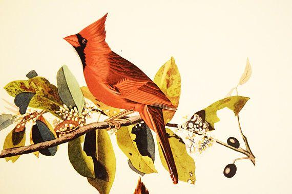 https://www.etsy.com/ca/listing/576100565/cardinal-print-audubon-folio-collection?ref=shop_home_active_75