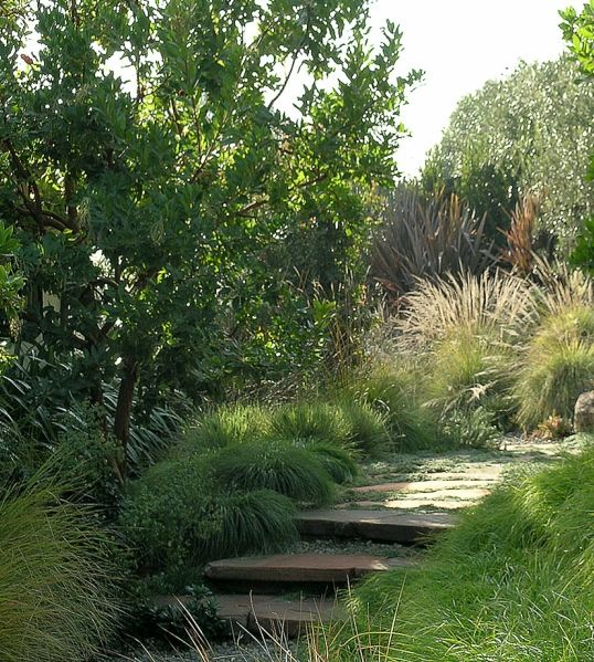 633 best ornamental grasses and other tall and or bushy for Outdoor tall grass plants