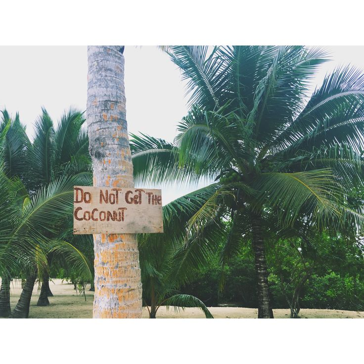 #Philippines #siargao #siargaoisland #summer #beach #palm #bikini #ocean #sand #pure #nature #palmtree #coco #coconut
