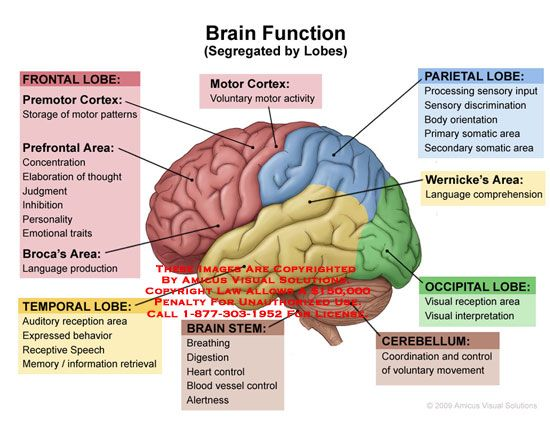 Lateral view of brain with lobes colored and functions listed.