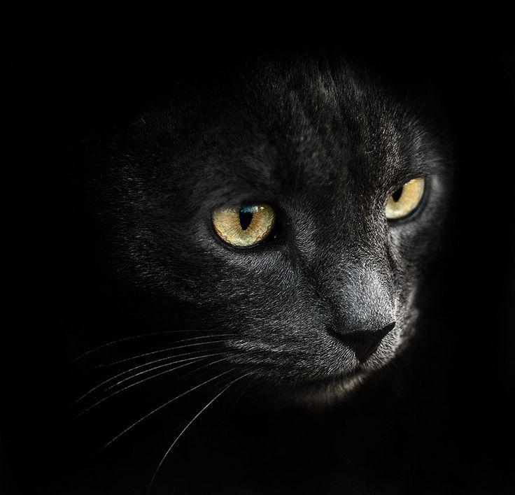 Sergey Polyushko to fotograf ukraińskiego pochodzenia, którego portfolio zawiera zarówno zdjęcia architektury, mody, jak i komercyjne reklamówki, czy fotografię uliczną. Jednak jego cykl pięknych i hipnotyzujących zwierzęcych portretów to jest to, przy czym publiczność zatrzymuje się najdłużej. Począwszy od domowych futrzaków takich jak koty i psy, aż po te nieudomowione,