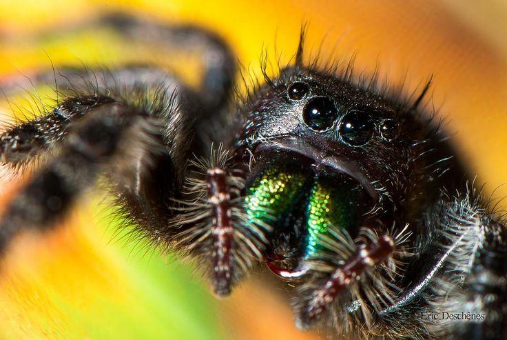 Green fangs by Eric Deschênes