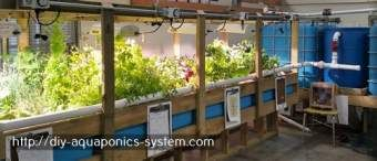 homemade hydroponics with fish - small hydroponic setup.hydroponic strawberries 2454929729
