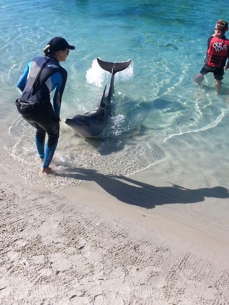 Dolphin (seaworld )