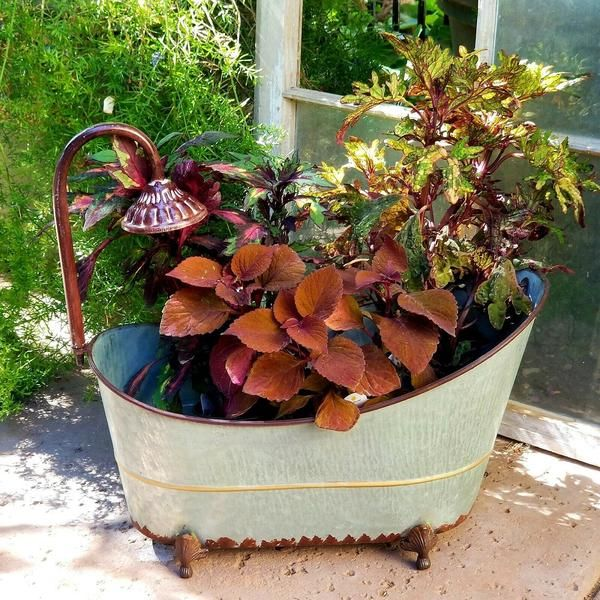 Antique Style Metal Shower Tub Flower Pot Planter Vegetable Garden For Beginners Flower Pots Container Gardening Vegetables