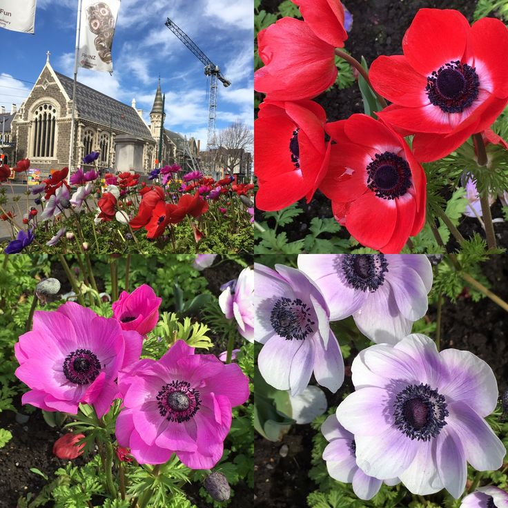 Pretty in Christchurch NZ