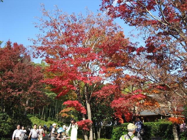 Emperor Hirohito Memorial Park in Tokyo, Japan