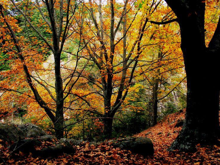 La Cumbrecita, #Cordoba   #ArgentinaEsTuMundo #Argentina #Tourism #turismo #travel #viajar #bosque #verde #otoño #autumn