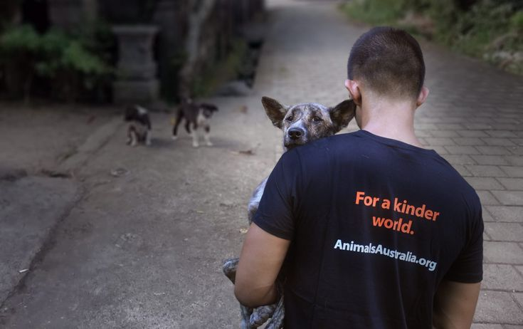 Bali's dogs are being tortured for their meat. And unwitting tourists are eating them.
