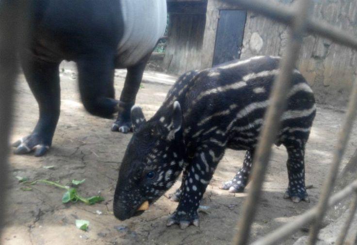 Hewan yang Terancam Punah Ini Lahir di Kebun Binatang Bandung