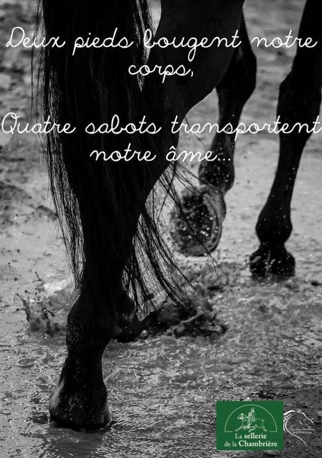 Citation ~ Deux pieds portent mon corps. Quatre sabots portent mon âme...