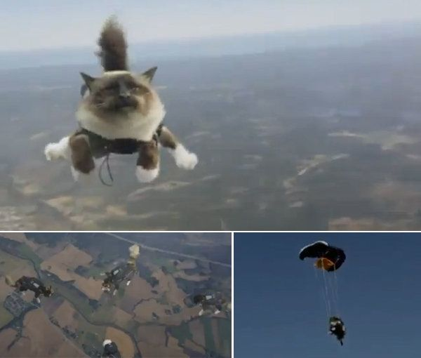 Lanzar gatos desde un avión no es una buena idea - Dando Guerrilla