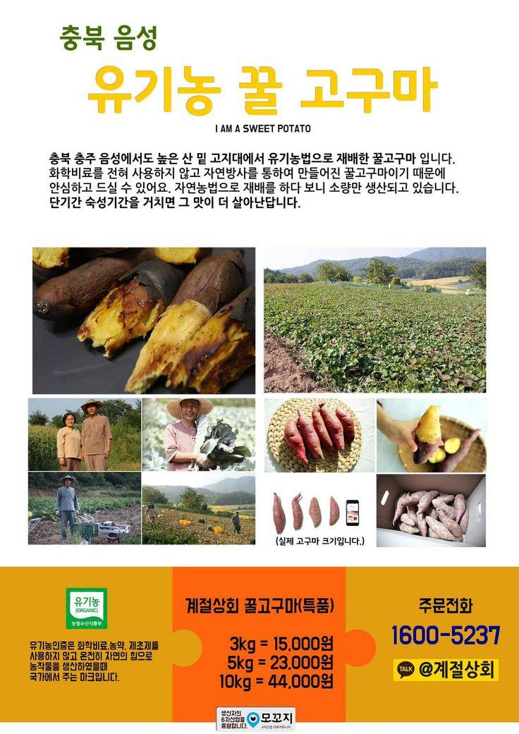 충북 음성 고산지대에서 자란 자연그대로의 선물  유기농 꿀 고구마 판매합니다.  #꿀고구마 #유기농고구마 #음성고구마 #농산물직거래 #모꼬지닷컴