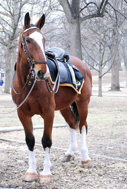 On Duty: A Boston Police Horse...