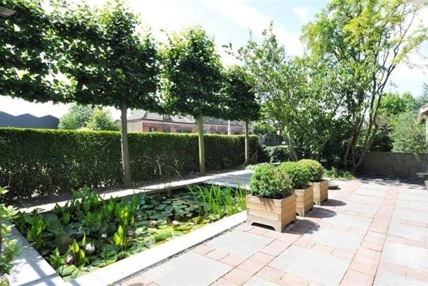 voortuin: leibomen en struik eronder. Minimale doorkijk of ballen in tuin