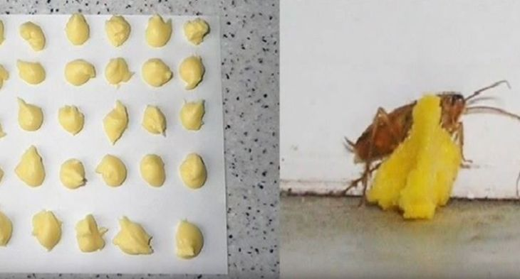 Say Goodbye To Fleas Roaches And Ants With 1 Ingredient