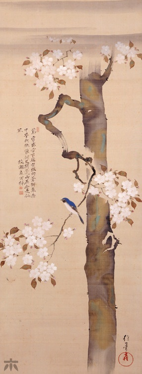 "Sakai Hoitsu, ""Small Bird and Cherry Tree"" Late Edo Period (19th century), Japan"