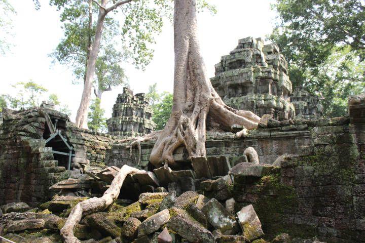 Ta Prohm, boomwortels. Cambodja, Siem Reap- Travelhype