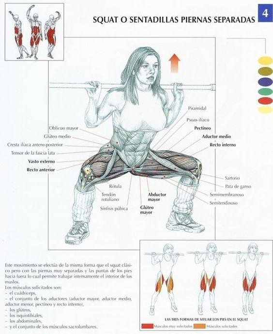 Resultado de imagen para como.trabajar los diferentes musculos de los gluteos