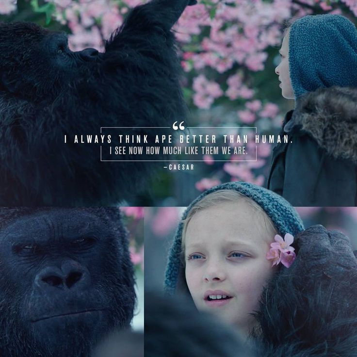 Luca and Nova - War for the Planet of the Apes