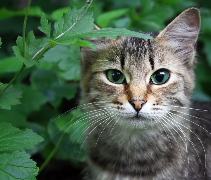100 CREATIVE CAT NAMES BY CATEGORY:   Can't think of a name for your new furry friend? We've compiled a list of 100 quirky, cute, and unique cat names by category right here for you to select from. Get funky and combine two, or simply get inspired and make up your own! You'll never...CLICK TO READ MORE #cats #kittens #catnames