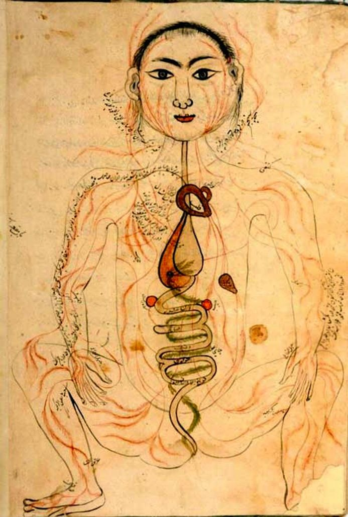 The Anatomy of the Human Body by Mansur ibn Ilyas. 17th–18th century illustrated manuscript