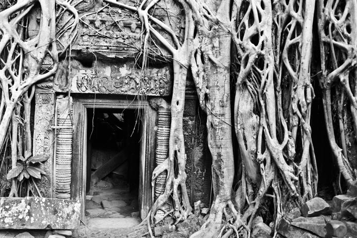 Ta Prohm - Angkor Thom . Cambodia