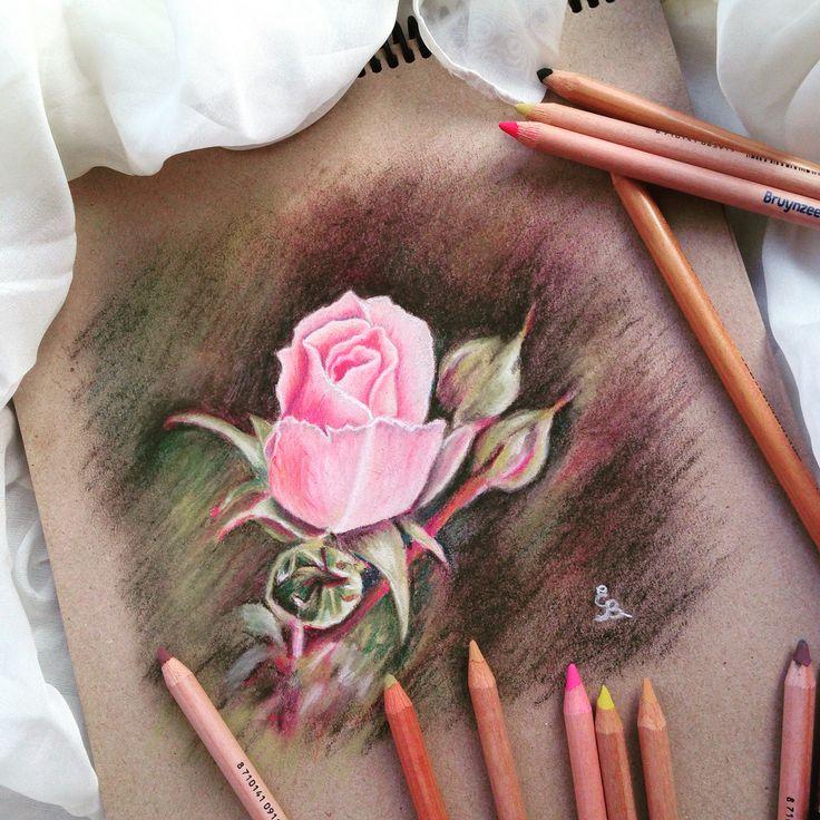 Rose in soft pastel pencils